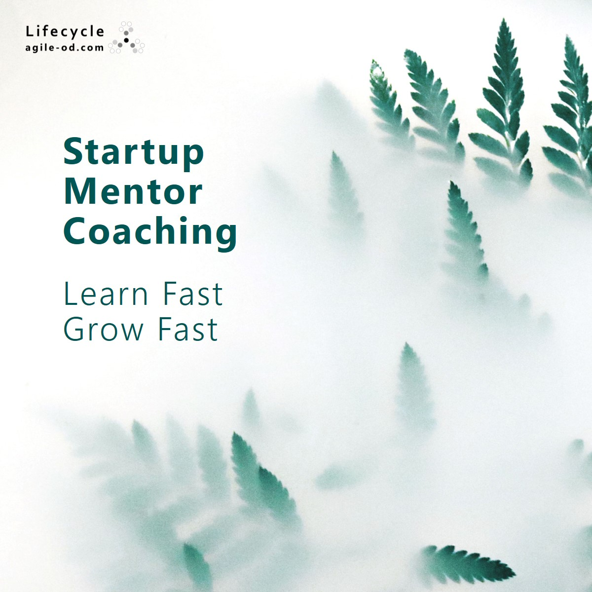 Startup Mentor Coaching | Lifecycle