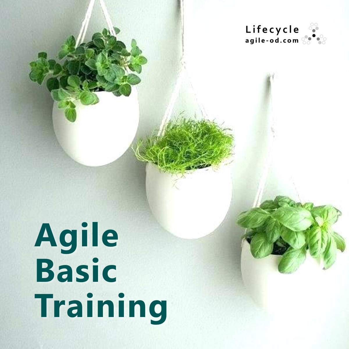 Agile Basic Training | agile-od.com