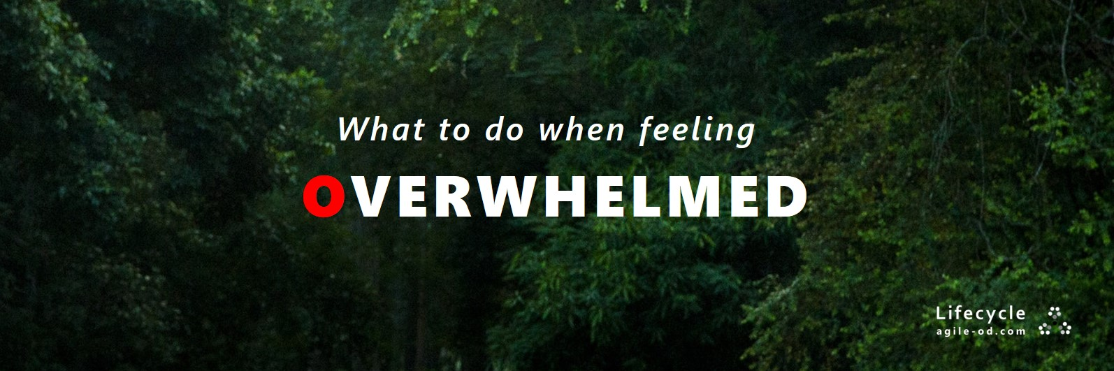 What to do when feeling overwhelmed